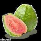 Ambrosial Guava Aroma Oil for Aroma Burner Potpourri Cosmetic Bath Salt