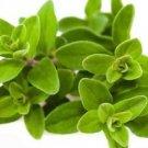 Ambrosial Marjoram Essential Oil (Origanum Marjorana) 100% Pure Natural