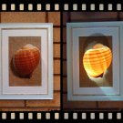 Handmade Real Seashell Frame Lamp with Free Delivery (Tonna Galea)
