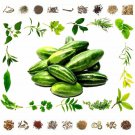 Organic Pure And Natural Raw Herb Kadu Padval - Trichosanthes Dioica