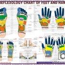 Engligh Language Reflexology Chart For Educational Purposes-Free Shipping