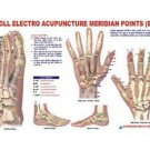 Acupuncture Meridian Points E.A.V. Chart for Lab And Life Science