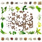 Nirgundi Seeds for Vata Problems Joints Vitex negundo Vitex Negundo Linn Nirgund