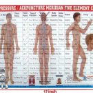 Meridian Panch Tatvha Five Element Chart - Study Academics Teaching Educational