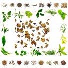Raw Herbs Sanjivani Jadi - Selaginella bryopteris-Organic Pure And Natural