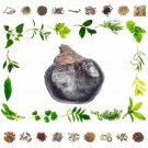 Biba - Semecarpus Anacardium Linn - Natural Ayurveda Health Care