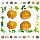 Organic Pure And Natural Raw Herb Kantkari - Ringani - 25 Gms