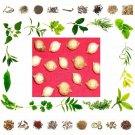Organic Pure And Natural Raw Herb Putravanti Phal - Putranjiva roxburghii f