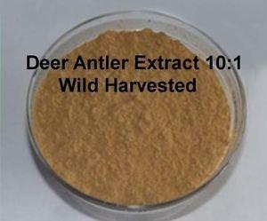 100% DEER ANTLER VELVET 10:1 EXTRACT POWDER ***1,200 SERVINGS**** POTENT organic