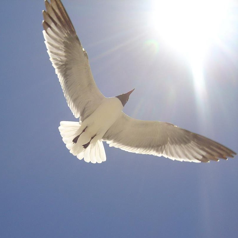 Prayers On Your Behalf - Natural Conjuring Powerful Works - Angelic Blessings