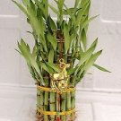 """3 Tier 4"""" 6"""" 8"""" Top Quality Lucky Bamboo For Feng Shui (Total About 38 Stalks)an"""
