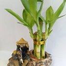 Lucky Bamboo Fortune with Fishman Ceramic Pot Unique