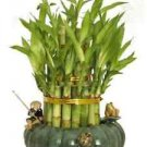 """3 Tier 4"""" 6"""" 8"""" Top Quality Lucky Bamboo Arrangement (FREE SHIPPING)"""