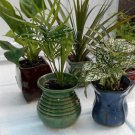 "Miniature Garden 5 -Plants in 3"" ceramic pots (FREE SHIPPING)"