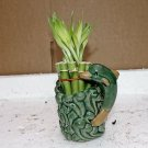 Live 10/4-6'' style Party Bamboo Plant Arrangement w/dolphin 4''Ceramic Vase
