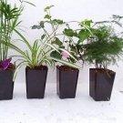 "Holiday Plants Fairy Garden Terrarium Plants - 4 Plants in 3.1/4"" Pots"