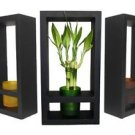 Lucky Bamboo in Colored Glass Vase with Wooden Frame