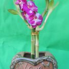 Lucky Bamboo Heart Style and Ceramic Vase 12''tall (FREE SHIPPING)