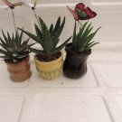 "3 Different Aloe Plants - Easy to grow - 3""ceramic Pots (FREE SHIPING)"