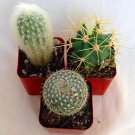 """Instant Cactus Collection - 3 Plants - 2"""" Pots - Excellent for Fairy Gardens (FREE SHIPPING)"""