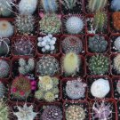 5 Gorgeous Cactus Collection (FREE SHIPPING)