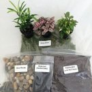 Terrarium/fairy Garden Kit / with Bird's Nest +3 Plants - Create Your Own Living