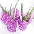 "Two Strong Aloe Vera - Medicine Plant Gift 4"" Pot Wrapped Unique"