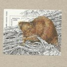 BELARUS EUROPEAN BEAVER UNUSED STAMP BLOC 1996