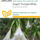12333 - SAFLAX  - Angel's Trumpet White - Brugmansia - 10 seeds