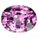 3.25 Ct. Lustrous Hiend Intense Pink Natural Spinel Loose Gemstone With GLC Certify