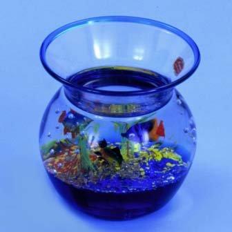 Vase Aquarium w/3 Fishes