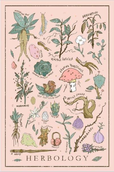 Harry Potter Herbology Vintage Poster