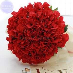 Rare Red Hydrangea Mother Seeds big blooms ball flowers
