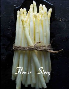 20 White Asparagus Seeds Rich in Vitamins Vegetable Seeds Growing