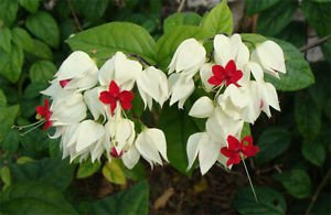 Flowers potted unicorn spit beads pearl Lotus Seedling Kirin Tuzhu