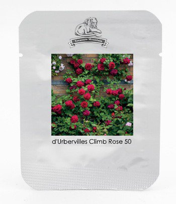 Rare 'Tess of the d'Urbervilles' Dark Red Climbing Rose Plant Flower Seeds