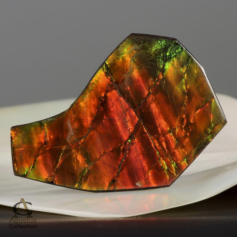 AMMOLITE Ammonite Rare Gem Stone from Canada 38 ct / 41.53 x 27.19 x 3.56 mm