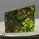 AMMOLITE Ammonite Rare Gem Stone from Canada  34.5 ct / 42.88 x 26.30 x 3.55 mm