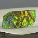 AMMOLITE Ammonite Rare Gem Stone from Canada 16.5 ct / 28.78 x 15.16 x 2.94 mm