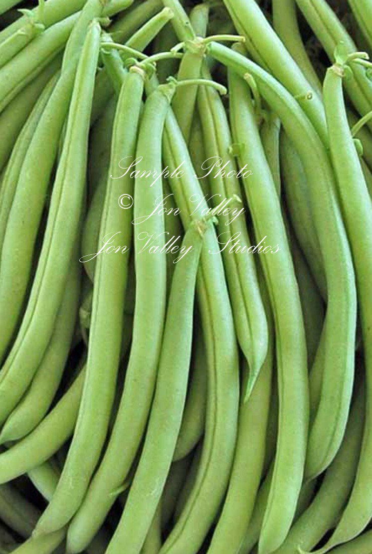 Commodore Bush Bean 75 Seeds Fresh or Frozen slender Pods Productive