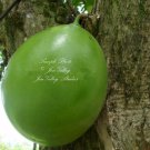 8 Seeds Crescentia alata Music Tree Seeds Bonsai Houseplant standard Gardening Fragrant