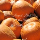Connecticut Field Pumpkin 25 Seeds Vegetable Seeds  Perfect for Carving Makes Great Pies