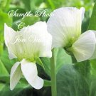 250 Seeds Whistler Winter Pea forage - cover crop Nitrogen Fixer Small or large Garden