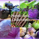 Serendipity's Purple Seed collection 5 Varieties 280 Seeds Carrot Pepper More!