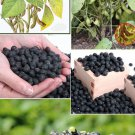 roasted black soybean 500g antiaging food estrogen