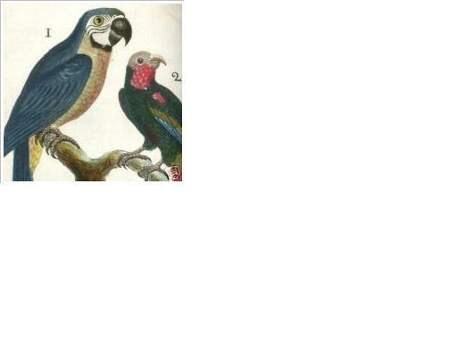 1787~BUFFON~FIRST COLOURED EDITION