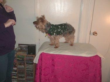 XS Warm Spartan Dog Coat - Handmade