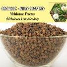 1 Lb/454g MELALEUCAE FRUCTUS Melaleuca Leucadendra Organic Wild Crafted 100% Fresh