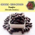 8 Oz/227g PRONOJIWO Sterculia Javanica Organic Dried Herbs Wild Crafted Aphrodisiac