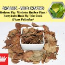 3 Oz / 84g Mistletoe Fig Leaves Mistletoe Rubber Plant Rusty-leafed BushFig Ficus Deltoidea